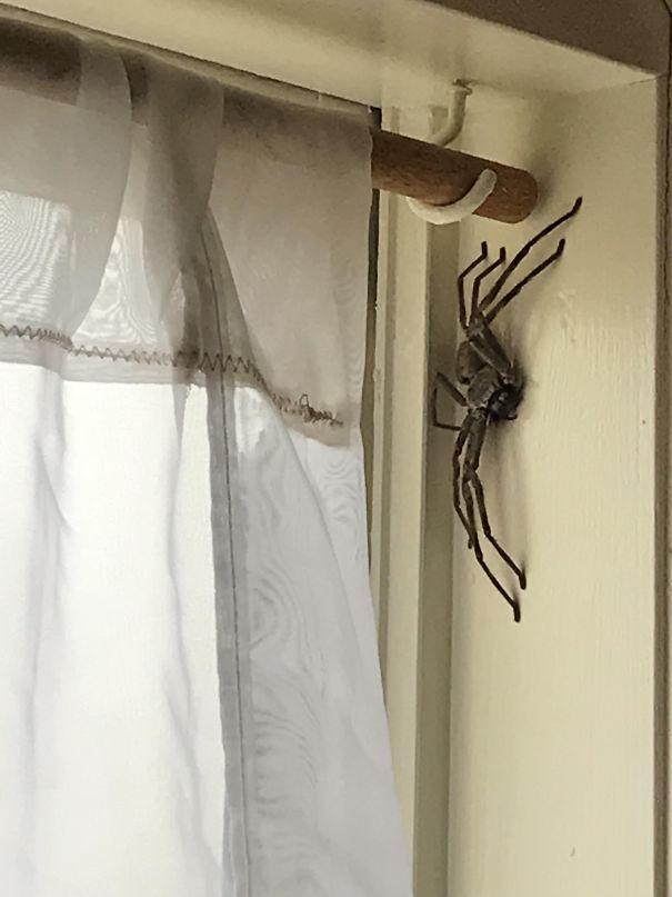5. Ai sợ nhện mà nhìn thấy cảnh này thì... xác định luôn.
