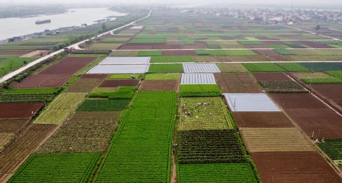 Toàn cảnh vựa rau lớn nhất TP Chí Linh