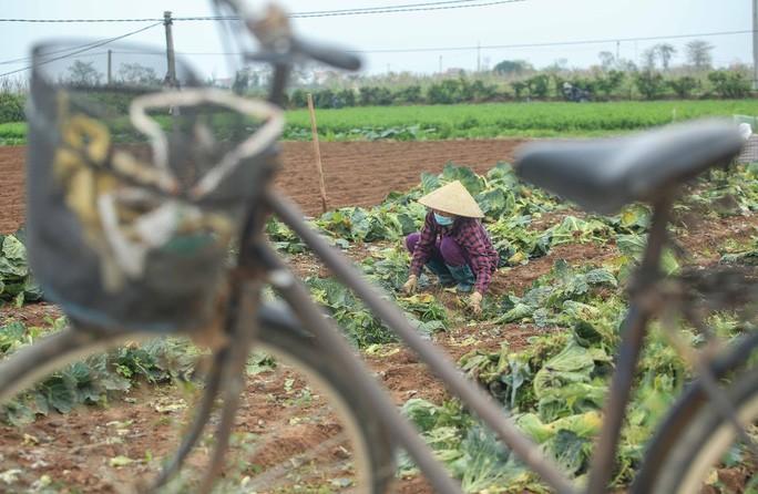 Người dân tỏ ra rất buồn khi nông sản của mình không bán được, tốn công sức mà không thu được đồng nào về