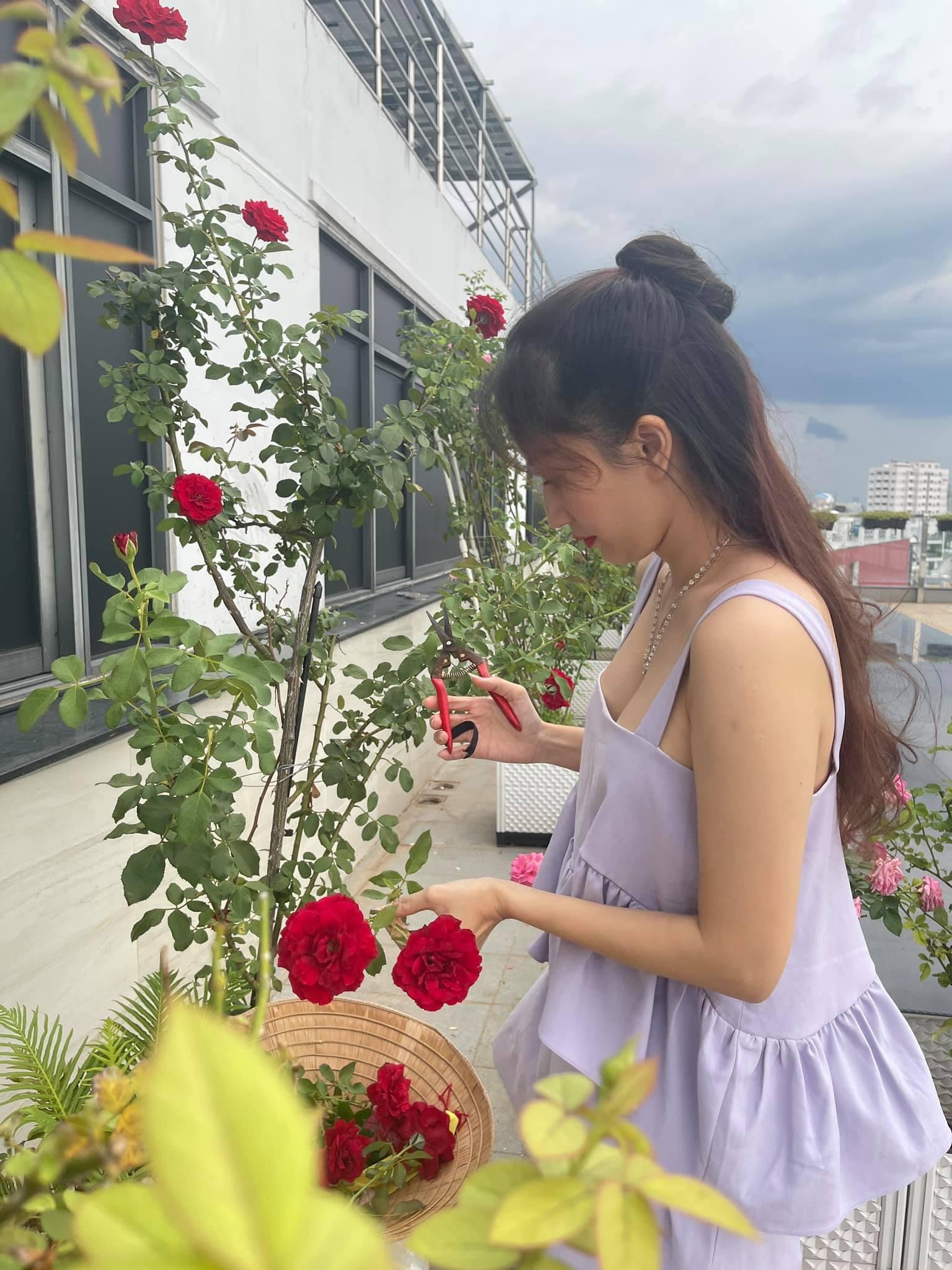 Khánh Thi thu hoạch hoa hồng.
