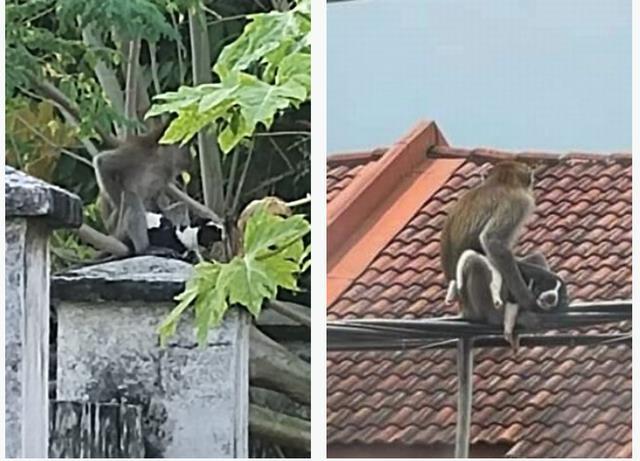 Con khỉ ngồi vắt vẻo trên đường dây điện, còn chú chó con thì nằm im sợ hãi.