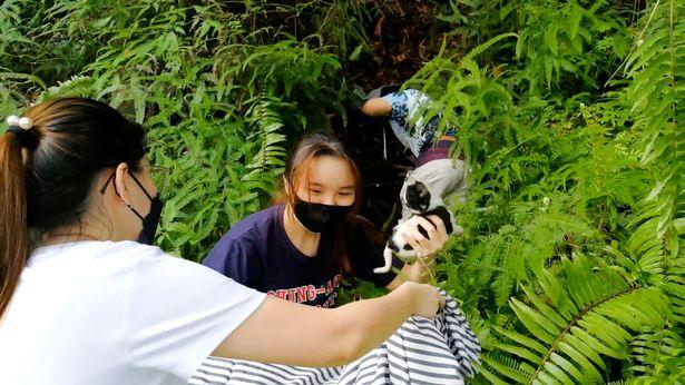Trước khi trốn thoát, nó ném chú chó con xuống 1 bụi cây rậm rạp, nhờ đó mà chú chó con không hề bị thương.
