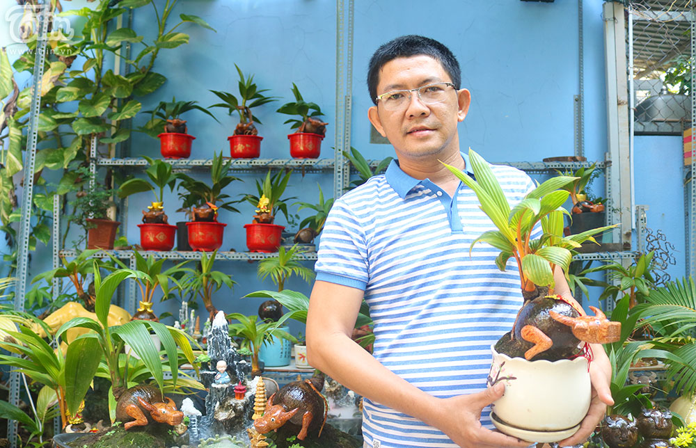 Anh Hiếu đãbắt đầu 'thú chơi'bonsai dừa từ 5 năm trước