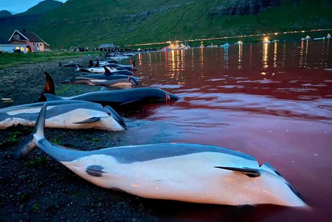 Những con cá bị giết thịt một cách man rợ. Ảnh:Sea Shepherd.