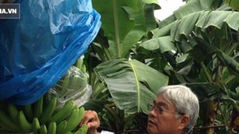 Nông dân triệu đô Huy 'chuối': Từ kiệt sức vì trồng mía sai cách đến vùng canh tác 1.000ha đất trên 6 tỉnh