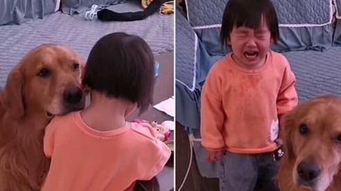 Video: 'Lịm tim' cảnh chú chó ôm ấp, vỗ về cô chủ nhỏ bị mắng