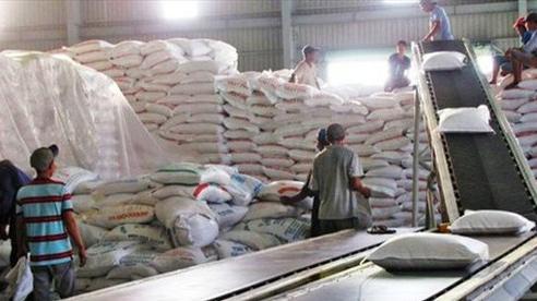 Gạo Việt Nam được các nhà nhập khẩu thu mua với giá cao