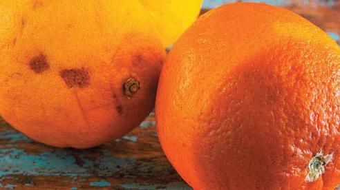 2 vợ chồng cùng lúc mắc ung thư gan không rõ lý do, bác sĩ nói 'thủ phạm' là loại trái cây độc gấp 10 lần xyanua mà họ ăn hàng ngày