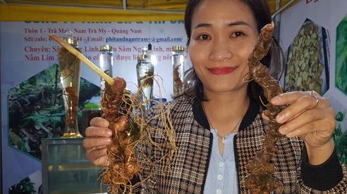 Quảng Nam chi 3 tỉ đồng trồng thử sâm Ngọc Linh nuôi cấy mô