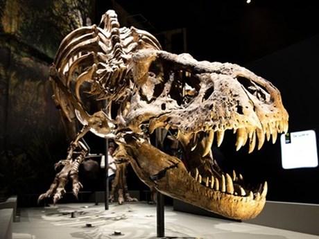 Phát hiện nhiều hóa thạch khủng long quý hiếm ở Trung Quốc