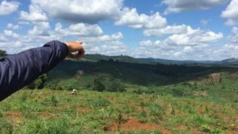 Chủ tịch Đắk Nông khẳng định sẽ thu hồi các diện tích đất giao trái quy định