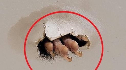 Đang ở phòng tắm, ngước lên trần nhà, người phụ nữ phát hiện thấy 1 thứ khiến ai cũng 'nổi da gà'