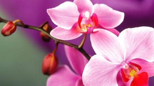 7 loại hoa không nên bày trên bàn thờ ngày Tết kẻo mất hết tài lộc