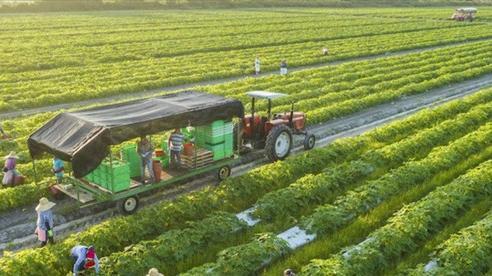 Chính phủ đồng ý kéo dài chính sách hỗ trợ bảo hiểm nông nghiệp