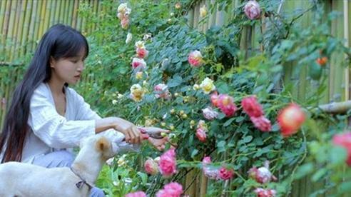Kênh Youtube của Lý Tử Thất xác lập kỷ lục Guinness thế giới