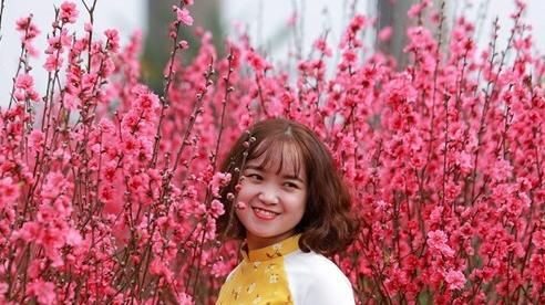 [Ảnh] Khoe dáng, chụp ảnh 'check in' tại vườn đào Nhật Tân những ngày cận Tết