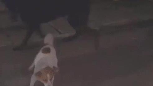 Màn 'phản chủ' dở khóc dở cười ngày đầu năm: Chú chó con phấn khích tha pháo sáng vào nhà khiến người đàn ông trở tay không kịp
