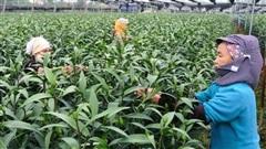 Tỷ phú hoa ly đất Đại Đồng