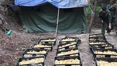 Thu giữ 5.000 con gà giống nhập lậu