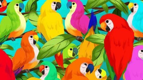 Thách thức thị giác 3 giây: Đố bạn tìm ra con tắc kè hoa trong đàn vẹt nhiều màu sắc