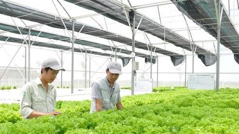 TP.HCM: Phấn đấu 72% hợp tác xã nông nghiệp hoạt động hiệu quả