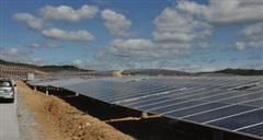 Phú Yên chuyển mục đích đất rừng trồng để thực hiện dự án điện gió