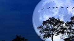 Khoảnh khắc kỳ ảo của trăng tuyết 'siêu to khổng lồ'