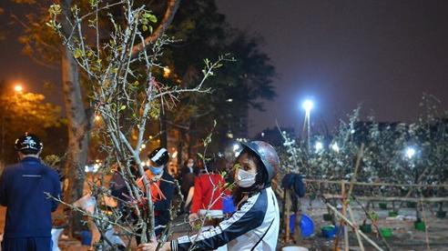 Người Hà Nội rộ mốt chơi hoa lê tiền triệu sau Tết, chuyên gia lên tiếng: 'Nên cấm việc chặt lê rừng'