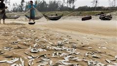 Ngư dân Thừa Thiên Huế ra khơi, bắt đầu vào vụ đánh bắt cá trích