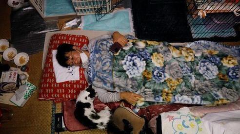 Người đàn ông nhận nuôi mèo quanh khu vực phóng xạ