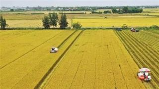 Chuyển mục đích sử dụng 65 ha đất trồng lúa tại Long An