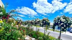 Vườn hồng 250m² rực rỡ sắc màu, đẹp như cổ tích của mẹ Việt