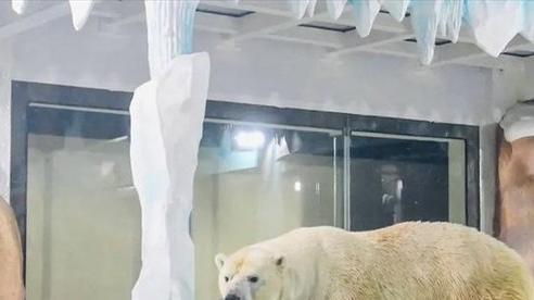 Độc đáo, 'khách sạn gấu Bắc Cực' khai trương ở Trung Quốc
