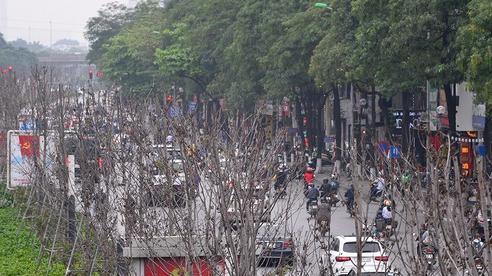 Hà Nội: Hàng cây phong lá đỏ trơ trụi như củi khô