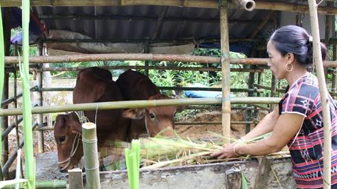 Người nghèo hưởng lợi từ các dự án phát triển bền vững nông thôn miền Trung