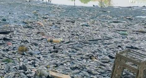 Hàng chục tấn cá chết nổi trắng kênh sau mưa lớn