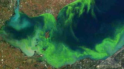 Sinh vật hàng tỉ tuổi phóng 'yếu tố chết nhanh' vào không khí nhiều nơi trên thế giới