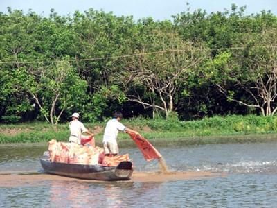 Tăng cường phòng, chống dịch bệnh trong nuôi trồng thủy sản
