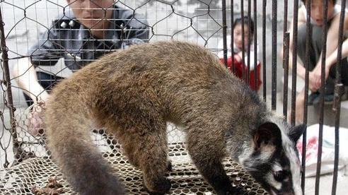 Nguồn gốc COVID-19: Đội chuyên gia WHO tập trung vào các trại động vật hoang dã