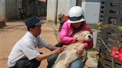 Đắk Lắk: Bất an với bệnh dại