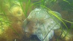Cỏ biển có khả năng hấp thụ CO2 nhiều gấp 2 lần so với rừng