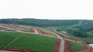 Sản xuất chè, cà phê ảnh hưởng bởi phân lô bán nền