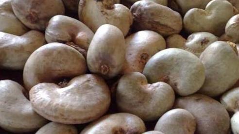Nhập khẩu hạt điều tăng hơn 300%