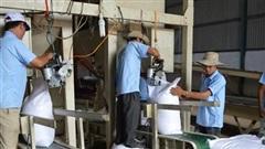 Xuất khẩu gạo, sản xuất đường 'hưởng lợi' từ chu kỳ tăng giá thực phẩm