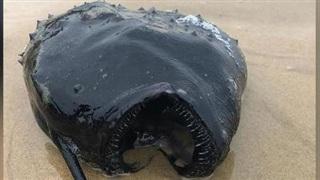 Phát hiện quái vật sống dưới đáy biển bất ngờ dạt vào bờ