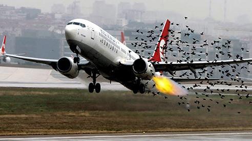 Yêu cầu tăng cường biện pháp bảo đảm an toàn bay
