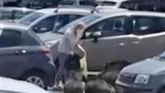 Đàn lợn rừng ngang nhiên bám đuôi, tấn công người đi siêu thị để cướp đồ ăn