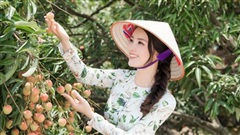 MC, Á hậu Thuỵ Vân được bà con nông dân Hải Dương trao danh hiệu đại sứ vải Thanh Hà