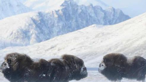 Khủng hoảng đa dạng sinh học tại Bắc Cực do biến đổi khí hậu