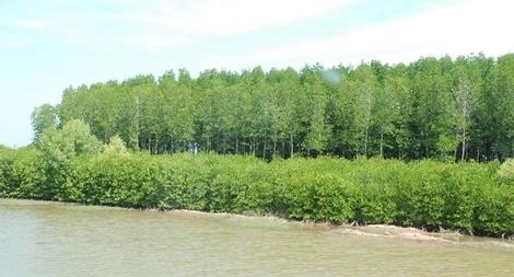 Bến Tre triển khai các biện pháp trồng, bảo vệ rừng ngập mặn ven biển
